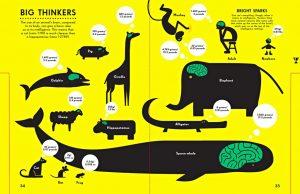 Brain size infographic